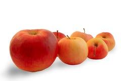 руководитель яблока Стоковое Фото