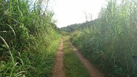 Руководство тропы к никакому пути стоковая фотография rf