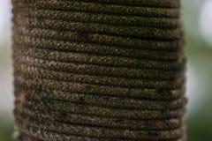 Руководство веревочки приходит назад польза новая, Стоковое фото RF