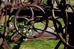 Рулевое колесо грейдера цветков растущее сквозное Стоковое фото RF