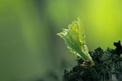 румпель виноградины Стоковое Фото