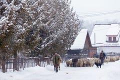 Румынский transhumance в зиме стоковая фотография