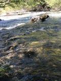 Русло реки стоковые изображения
