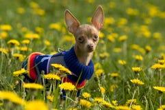 русская игрушка terrier Стоковые Изображения RF