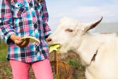 Русская капуста козы питания девушки Стоковое Изображение RF