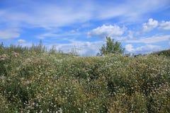 Русские поля, когда ветер идет на их стоковое изображение rf