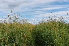 Русские травы поля Стоковое фото RF