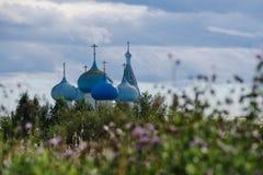Русские травы поля Стоковое Изображение RF