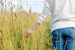Русские травы поля Стоковое Изображение