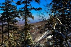 Русский лес Стоковое Изображение RF