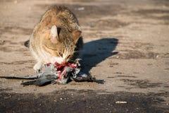 Русский кот Стоковое Фото
