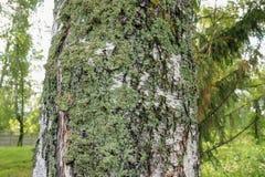 Русский лес в лете стоковое изображение rf