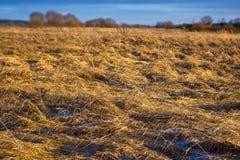 русский поля сельской местности стоковая фотография rf