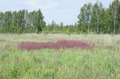 Русское поле на летний день Стоковые Изображения