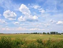 Русское поле Стоковое фото RF