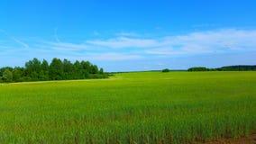 Русское поле Стоковая Фотография
