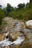 Русло реки в горах ruwenzori Стоковые Изображения RF