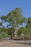 Русло реки засухи сухое Стоковое Изображение RF