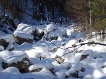 Русло реки Snowy Стоковое Изображение