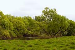 Ручеек весны Стоковые Изображения RF