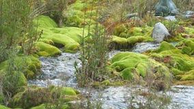 Ручеек горы среди камней покрытых с зеленым мхом прозрачное, чисто течение воды пропускает среди мха 4K видеоматериал