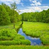 Ручеек и лужок и лес. Стоковые Фотографии RF