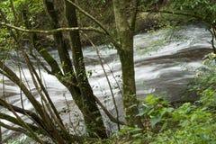 Ручеек от среди деревьев стоковая фотография