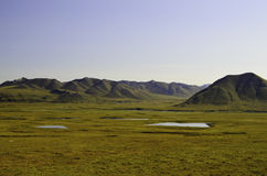Ручейки в Аляске Стоковая Фотография