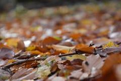 Ручка детали стоя на кровати листьев Стоковое фото RF