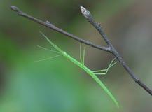 ручка насекомого Стоковые Фото
