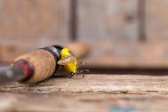 Ручка рыболовной удочки с прикормом на деревянном Стоковые Фотографии RF