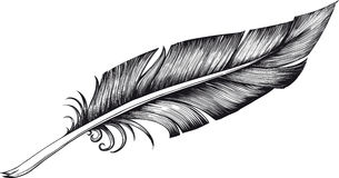 Ручка Quill Стоковое Фото