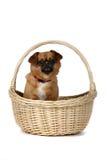 ручки собаки корзины wicker коричневой малый Стоковое Изображение RF
