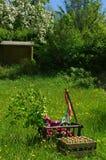 Ручная тележка на зеленом луге весной на день отцов Стоковое Фото