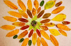 Ручной работы мандала сделанная от высушенных листьев и заводов Стоковое Изображение RF