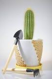 ручные резцы кактуса садовничая Стоковые Изображения RF