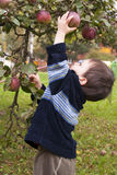 рудоразборка ребенка яблока Стоковое Изображение
