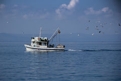 Рыбацкая лодка и чайки Стоковая Фотография RF