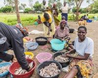 Рыбацкий поселок 2017 SEPT. 7, Кения Африканские женщины сортируя задвижку утра удя стоковые фотографии rf