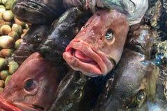 Рыба возглавляет для продажи на рынке Стоковое Изображение