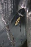Рыба в замороженном льде Стоковая Фотография