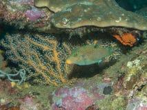 Рыба в отверстии Стоковые Изображения