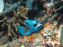 Рыба в отверстии Стоковое Изображение RF