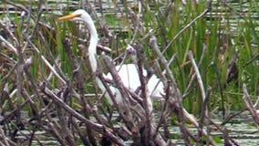 Рыба звероловства Egret видеоматериал