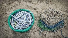 Рыба и веревочка Стоковая Фотография