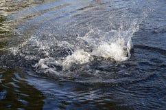 Рыбалка Стоковая Фотография RF