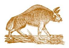 Рыба лежа на том основании перед striped hyaena h гиены иллюстрация вектора