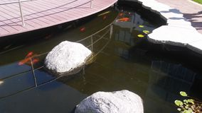 Рыба стоковые изображения