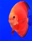 Рыба Стоковая Фотография