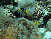 Рыба Стоковое Фото